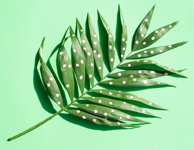 Zielone malowane paproci tropikalny pozostawia długi widok