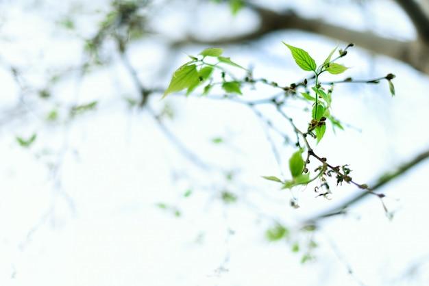 Zielone młode liście. słoneczny dzień i wiosna natura tło. koncepcja wielkanoc. skopiuj miejsce.