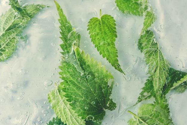 Zielone naturalne liście w wodzie lub zimnym napoju. koncepcja zdrowej żywności. minimalna ściana natury. leżał na płasko.