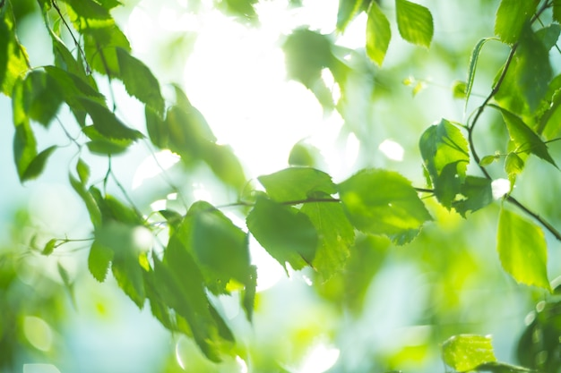 Zielone naturalne rozmyte i piękne jasne tło