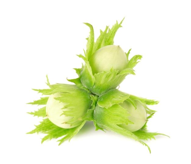 Zielone orzechy laskowe na białym tle. świeże zielone orzechy laskowe.