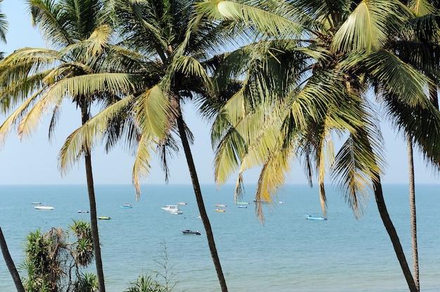 Zielone palmy do oceanu w słoneczny tropikalny dzień.