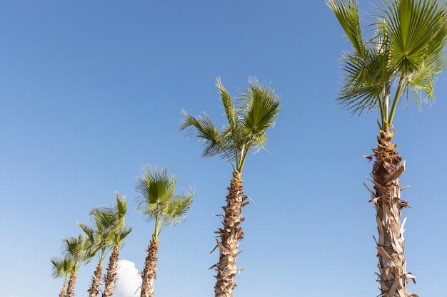 Zielone palmy i błękitne niebo