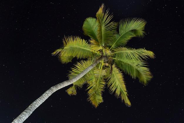 Zielone palmy pozostawia na nigth