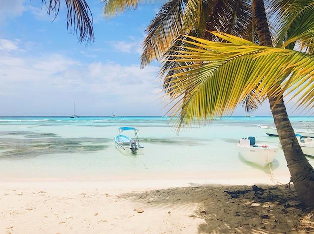 Zielone palmy unoszą się na niebie w słonecznej plaży