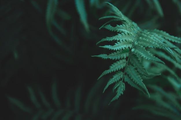 Zielone paprocie opuszczają tło.