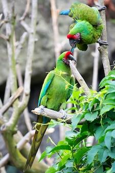 Zielone papugi na drzewie