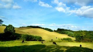Zielone pastwiska, krowy