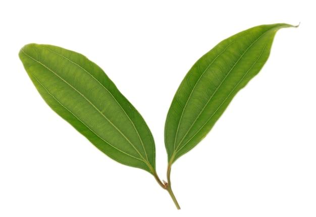 Zielone pikantne liście laurowe na białym tle
