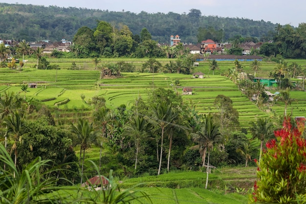 Zielone pola ryżowe jatiluwih na wyspie bali w indonezji wpisane na listę światowego dziedzictwa unesco.jedno z polecanych miejsc do odwiedzenia na bali ze spektakularnymi widokami