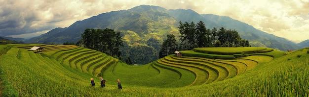 Zielone pola ryżowe na tarasach w muchangchai, wietnam