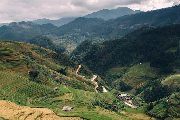 Zielone pola ryżowe na tarasowych w muchangchai, wietnam pola ryżowe przygotowują żniwa na północnym zachodzie