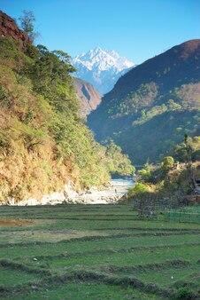 Zielone pola ryżowe na wzgórzach nepalu