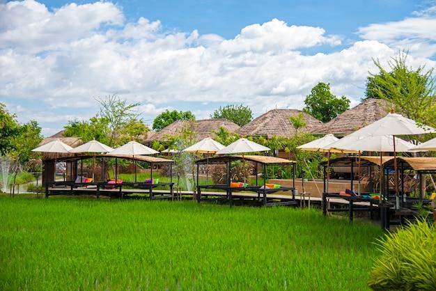 Zielone pola ryżowe posadzone w kurorcie. pora deszczowa w dystrykcie saraphi w prowincji chiang mai w tajlandii.