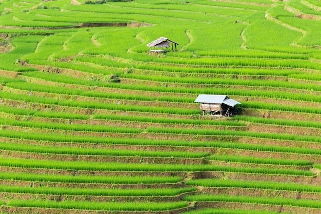 Zielone pola ryżowe w górach.