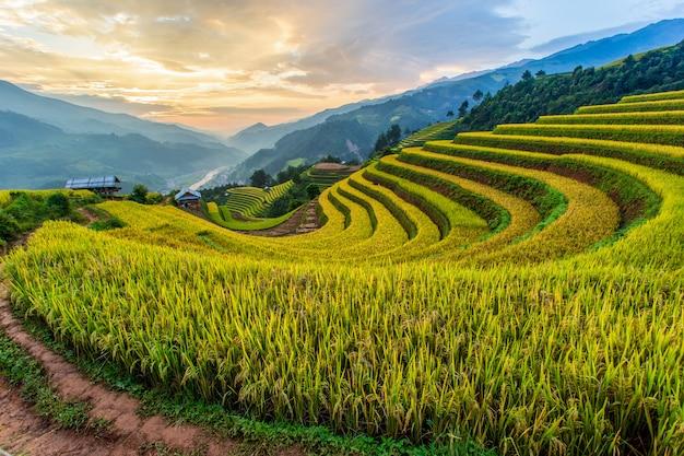 Zielone pola ryżowe w mu cang chai