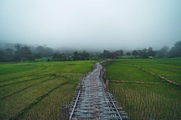 Zielone pola ryżowe widoki na pola ryżowe, pola ryżowe i góry