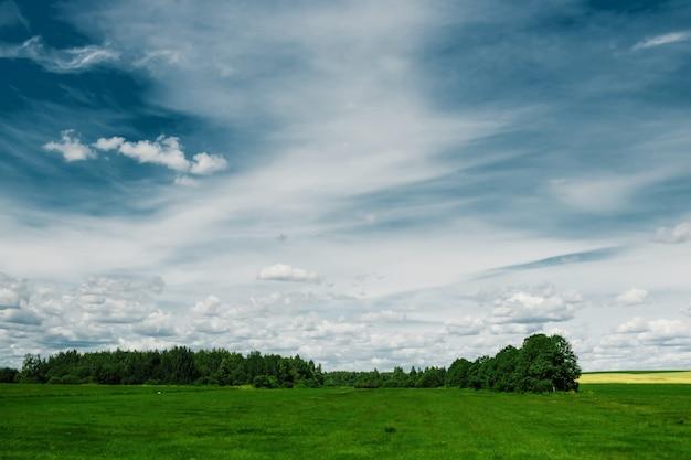Zielone pole, błękitne niebo, białe chmury.