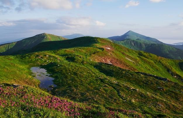 Zielone pole i białe chmury. majestatyczne karpaty. piękny krajobraz. widok zapierający dech w piersiach.