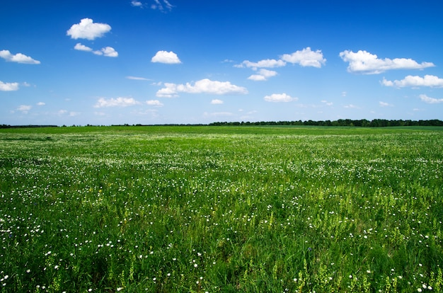 Zielone pole i błękitne niebo, widoki horyzontu