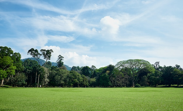 Zielone pole i drzewa w king garden of peradeniya