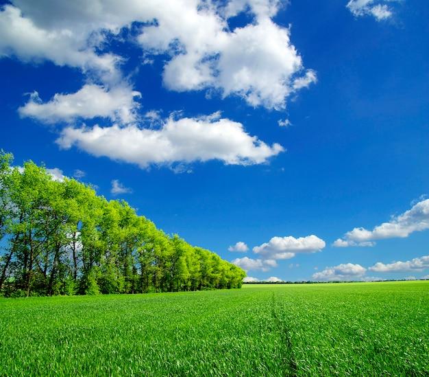 Zielone pole i drzewa