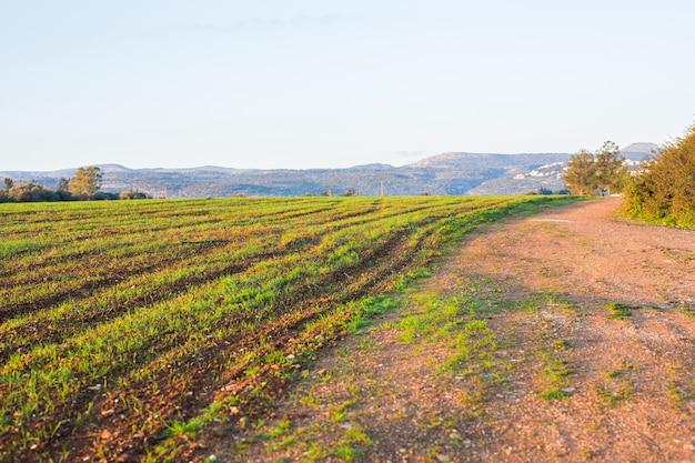 Zielone pole obszarów wiejskich we wczesnych godzinach porannych.
