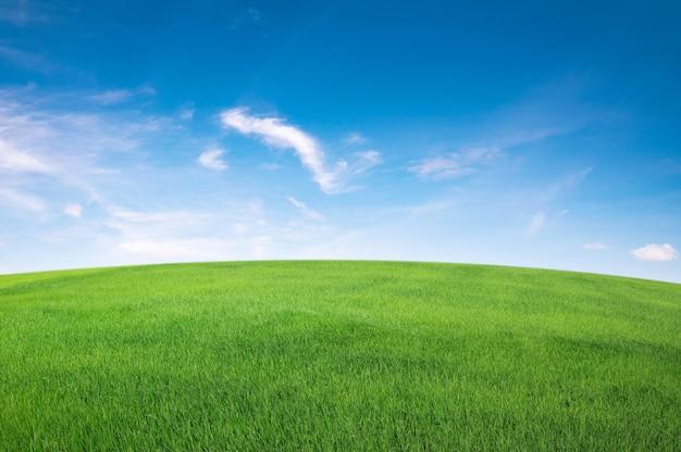 Zielone pole trawy z błękitnym niebem i białą chmurą reklamy. natura krajobraz w tle