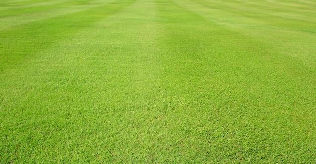 Zielone pole trawy