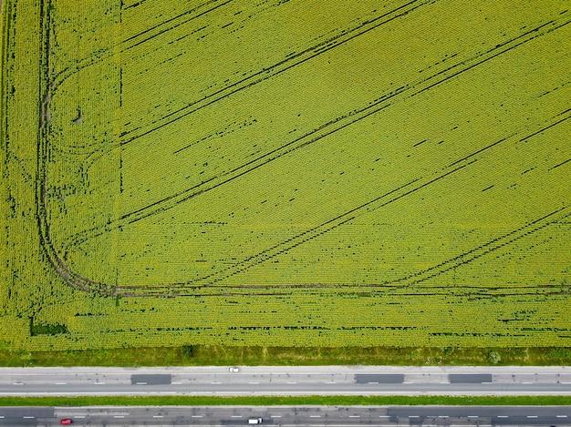 Zielone pole uprawne z porośniętymi kiełkami pszenicy, wzdłuż pola droga z samochodami. zdjęcia lotnicze z latającego drona. naturalne zielone tło. widok z góry