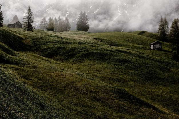 Zielone pole w pobliżu drzew