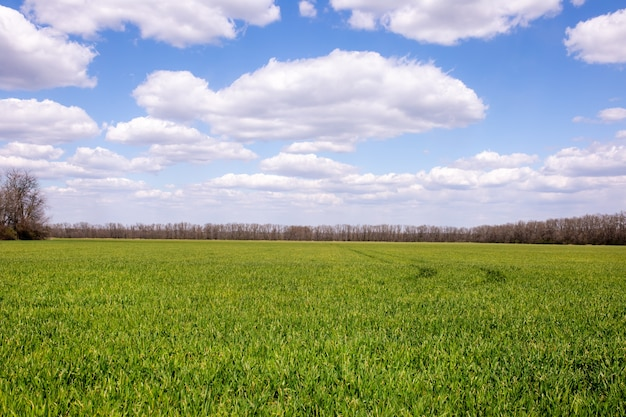 Zielone pole z niebieskim niebem i dużymi chmurami pod słońcem