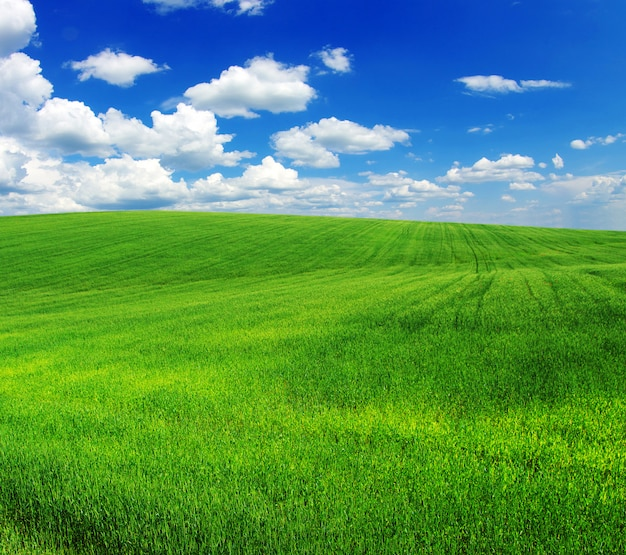 Zielone pole