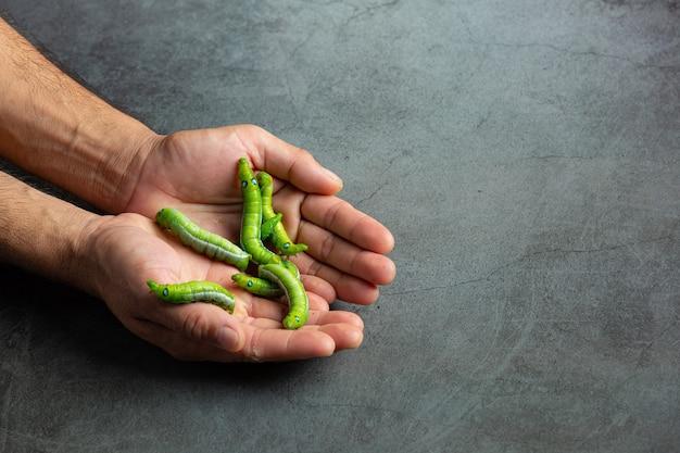 Zielone robaki w rękach człowieka