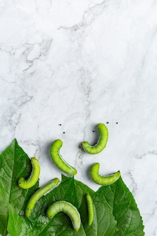 Zielone robaki ze świeżymi liśćmi na podłodze z białego marmuru