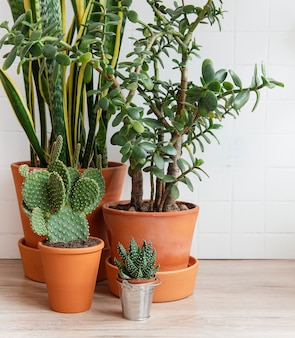 Zielone rośliny doniczkowe na stole w domu