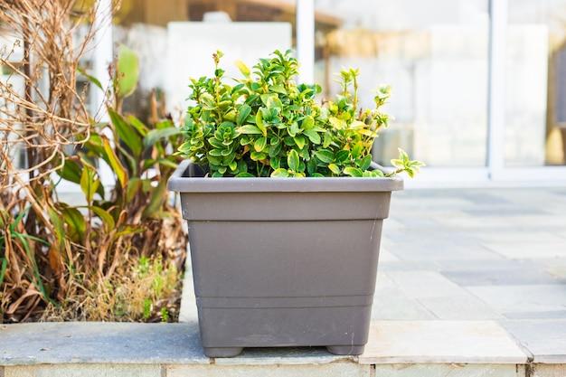 Zielone rośliny doniczkowe na zewnątrz. różne rośliny doniczkowe i sadzonki