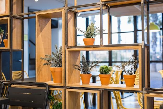 Zielone rośliny doniczkowe w pięknej doniczce na zewnątrz