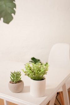 Zielone rośliny i kwiaty.