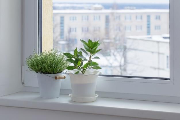 Zielone rośliny na parapecie zimą