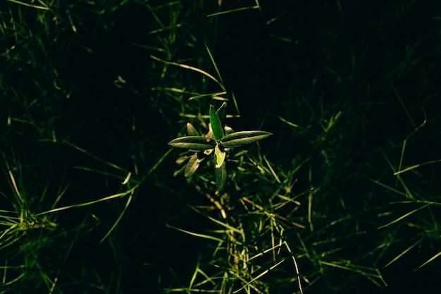 Zielone rośliny na słońcu na wiosnę.