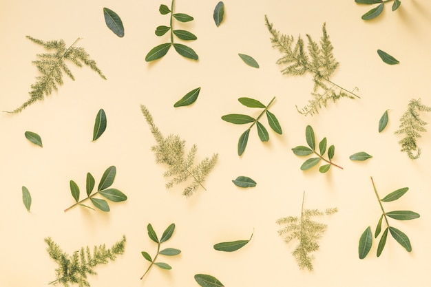 Zielone rośliny rozgałęziają się rozpraszającego na żółtym tle