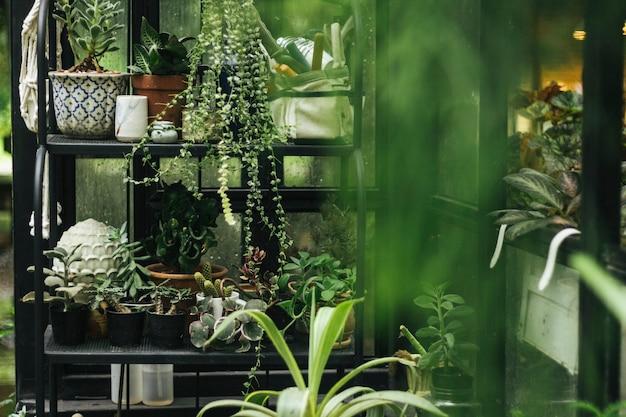 Zielone rośliny w szklarni