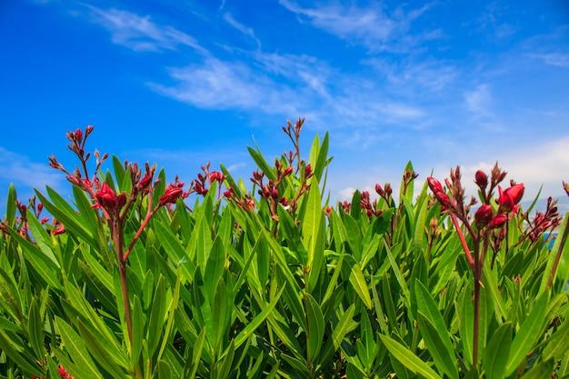 Zielone rośliny z czerwonymi kwiatami na tle błękitnego nieba.