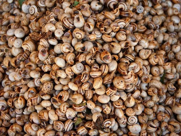 Zielone ślimaki na rynku rolników widok z góry