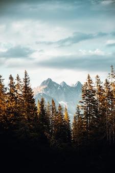 Zielone sosny w pobliżu pokryte śniegiem góry pod zachmurzonym niebem w ciągu dnia