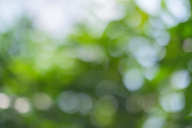 Zielone światło bokeh z naturalnego światła