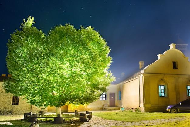 Zielone świecące drzewo w nocnym parku pod niebem z wieloma gwiazdami