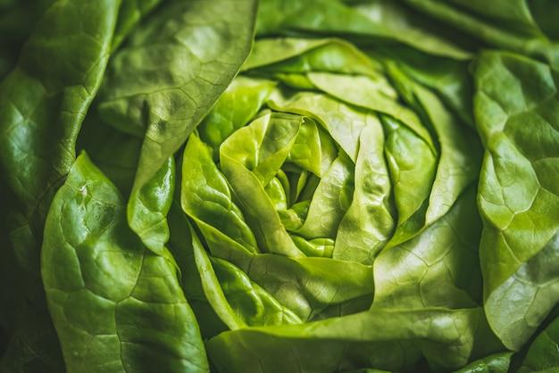 Zielone świeże liście sałaty masłowej