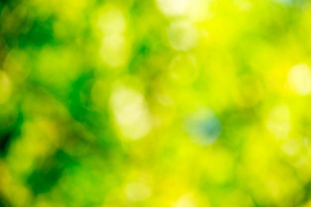 Zielone tło bokeh